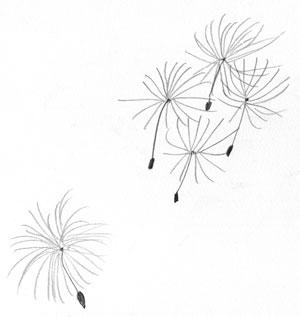 fliegende Pusteblumensamen